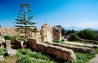 Roman ruins of Carthage and tree. Tunisia