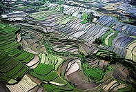 Rice cultivation and rice terraces. Bali island. Indonesia.