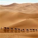 Camel caravan. Libya Sahara sandy desert Mourzouk Erg.