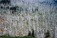 SG U, Umwelt, Waldsterben, Blick über Wald, kranke Nadelbäume, Tschechien  baumsterben, umweltverschmutzung, natur, nadelbaum, abgestorben, kahl, kran...
