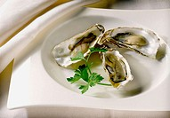 Oysters dish