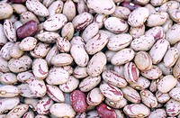 Borlotti beans.