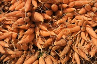agriculture, carrots, crop, food, harvest, pile, sales, storage, vegetable,