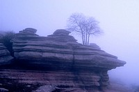 Tree growing on limestone rock formation in foggy morning. Torcal de Antequera Natural Park, Málaga province, Spain