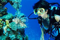 Spotfin lionfish (Pterois antennata) being studied by a diver. This lionfish hides in crevices and under ledges during the day but goes out searching ...