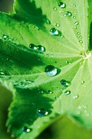 Drops of water on leaf, close up