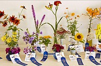 Vases of blue ribbon winning flowers, displayed. Lake County Fair, summer. Grayslake. Illinois. USA