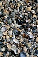shells, venice, italy