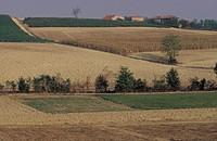 monferrato area, near moncalvo (at)