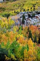 autumn forest, California
