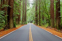 Road through Redwood State Park. Northern California. USA