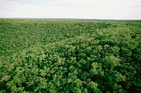 Tamaulipan tropical brush. South Ciudad Victoria. Tamaulipas. Mexico.