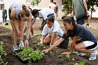 Florida International University students, FIU track and field cross country teams, gardening and landscaping. Hands On Miami Day. Miami. Florida. USA...