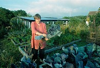 Woman pickin cabbage in her garden in Bornholm 2004