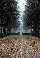 Road covered with dried leaves
