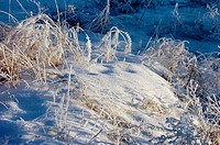 Dead grass covered in ice and snow
