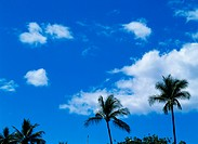 Palm tree & sky (thumbnail)