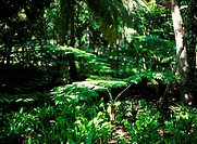 Tropical forest (thumbnail)