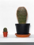 Cacti on shelf