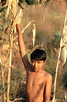 Boy at corn plantation. Mexico