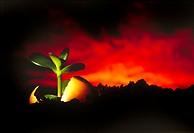 Environment & nature, Plants,