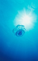 Low Angle Shot of a Jellyfish