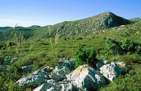 Garraf Natural Park. Garraf Massif. Barcelona province. Catalonia. Spain