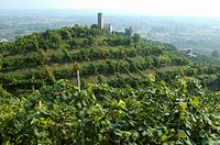 treviso province, prosecco vineyards