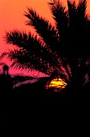 Silhouette of a palm tree at sunset (thumbnail)
