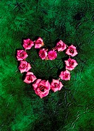 Red flowers in the shape of a heart (thumbnail)