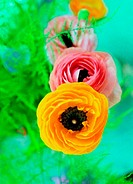 Pink and yellow flowers (thumbnail)