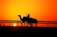 Camel rider at sunset in Nad Al Sheba, UAE