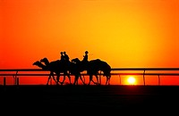 Young camel jockeys at sunset in Nad Al Sheba, UAE