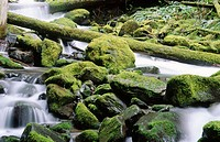 Moss covered rocks in a stream. USA