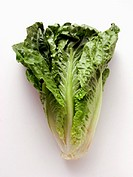 A Head of Romaine Lettuce