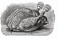 Poularde (illustration)