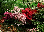 AzaleasNew Jersey State Botanical GardenNew JerseyUSA