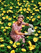 Senior woman amidst hundreds of yellow hibiscus flowers, watering plants, smiling