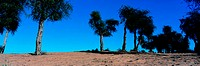 Trees in the desert in the UAE (thumbnail)