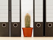Cactus between folders