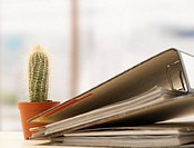 Cactus and folders