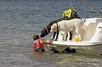 Family pet dogs waiting for kids to come back and play on weekend boat on lake in Georgia, USA