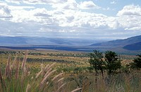 panorama at route R 63, Karoo, Bedford, Eastern Cape, South Africa