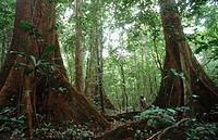 Forest, Korup, Cameroon