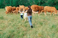 Girls running at herd of cows