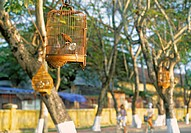 Caged birds, Hue, Vietnam