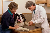 Male veterinarian examining a dog with a woman