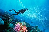 Diver over coral reef. Andaman Sea, Thailand