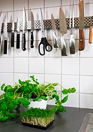 Herbs and utensils in a kitchen
