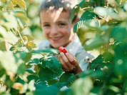 Boy holding a strawberry